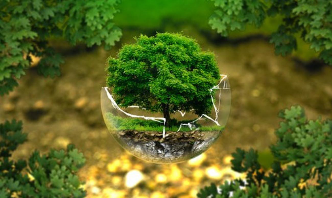 पेड़ों को बचाने का अनोखा तरीका